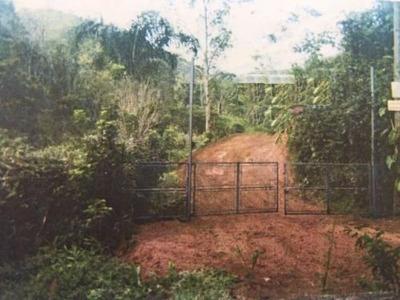 Area Em Miracatu 223 Hectares, Para 51 Lotes De Chacaras