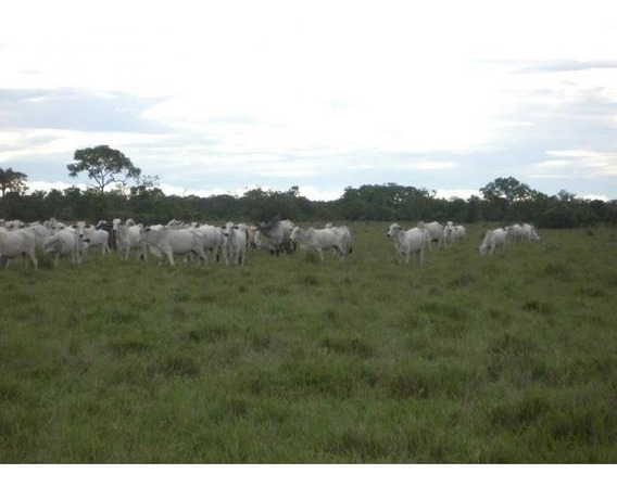 Fazenda Para Venda Em Água Fria, Rea Zona Rural Agua Fria/ba R$ 350.000.000 - 31732_2-869350