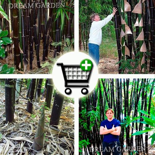 Imagem 1 de 9 de Bambu Negro Gigante Bambusa Lako -- Sementes Para Mudas