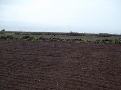 Fazenda A Venda Em Lagoa Da Confusão - To ( Dupla Aptidão ) - 216