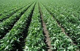 Fazenda A Venda Em Assis -sp (soja) - 830
