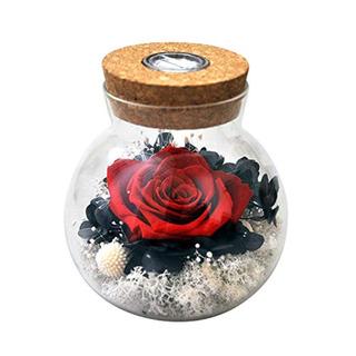 Sanran Preservado A Mano Real Rosa Presente