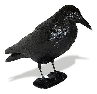 Cuervo Ahuyenta Espanta Palomas Raven
