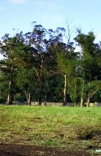 Imagen 1 de 5 de Vendo Amplio Terreno - Lote - En Mar Del Plata - Titular