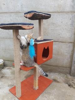 Rascador Para Gato, La Estructura Es De Madera