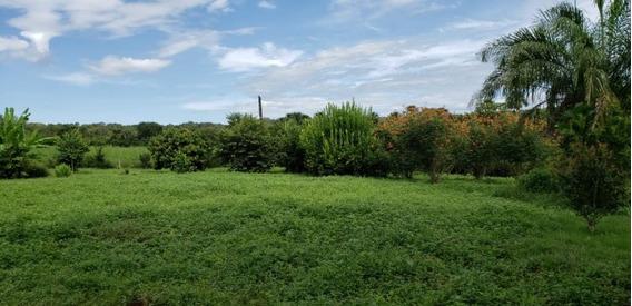 Fazenda A Venda Em Palmas - To (dupla Aptidão) - 1120