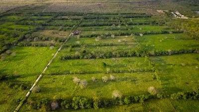 Terreno Venta En Mérida - 350 M2