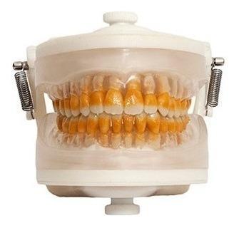 Manequim Odontologico Perio I Prodens Pronew Top