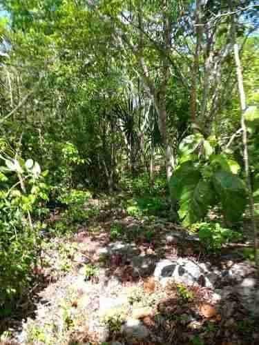 En Venta Terreno Habitacional Con Cenotes