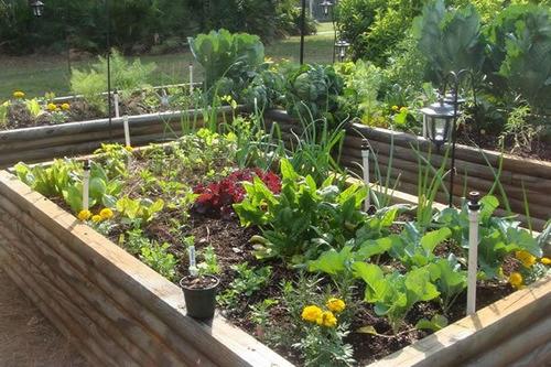 Já Pensou Em Ter Uma Horta Em Sua Casa?pequenos Espaços