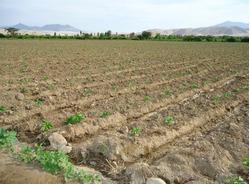 Ocasión, Venta De Terreno Agrícola Para Mango Kent