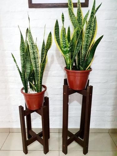 Imagen 1 de 5 de Planta Sanseveria