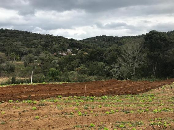 L. Terrenos Para Construção E Investimento Bem Demarcados.