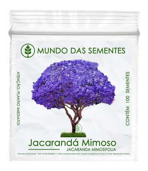 100 Sementes Jacarandá Mimoso Mimosifolia Azul Árvore