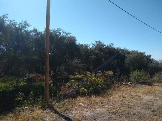 Vendo Quinta Con Plantas Olivo Y Frutales Llamar 3804443268