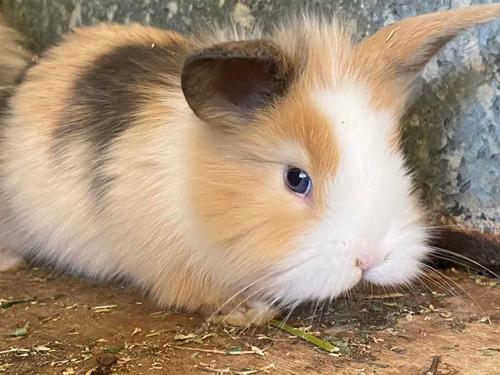 Imagen 1 de 12 de Conejos Enanos. Son Un Peluche!