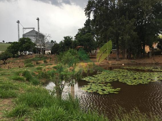 Fazenda De 50 Alqueires Em Bragança - 1541