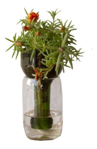 Imagen 1 de 5 de  Plantas Interior Suculenta Little Plant 15