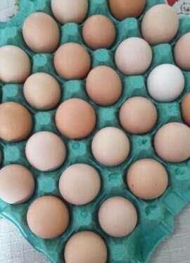 Ovos Galados Indio Gigante