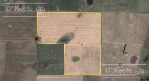 Campo De 155 Has En Venta En Benito Juarez - 100 % Agrícola - Excelente Rentabilidad