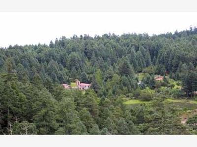 Terreno En Venta Atrevete A Cambiar Tu Vida Regalate Un Hermoso Lugar En El Bosque De Hidalgo