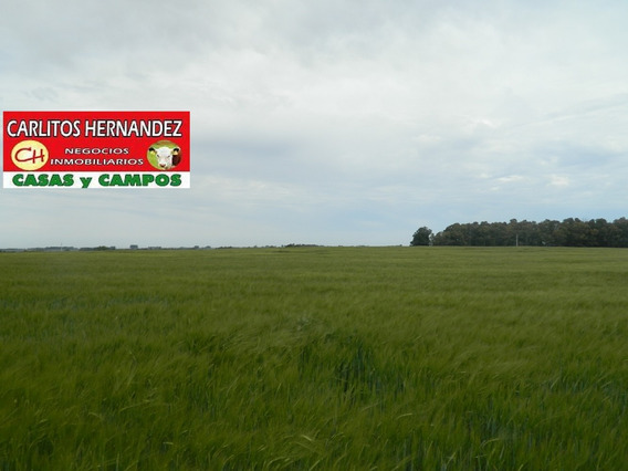 Campo Terreno Alquilar De 1 Hectarea $ 10 Mil P Mes San Jose