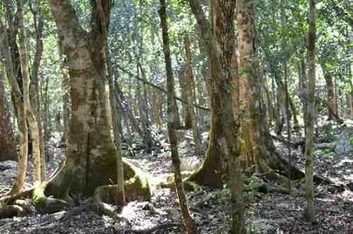 Excelente Oportunidad De Inversión En Ruta De Los Cenotes