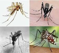 Imagen 1 de 6 de Insecticida Organico Natural