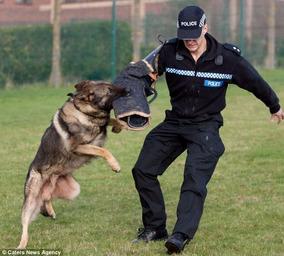 Adestramento De Cães Em 3 Dvds Para Todos Os Cachorro Ujm