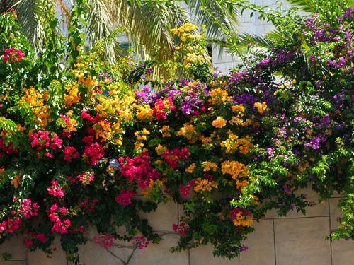 Imagen 1 de 8 de Santa Rita Varios Colores Cada 5 Ejemplares Abono De Obse!!!