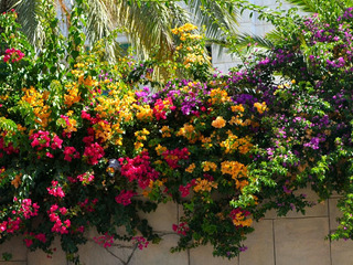 Santa Rita Varios Colores Cada 5 Ejemplares Abono De Obse!!!