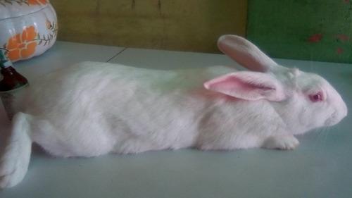 Tío Conejos Pdf