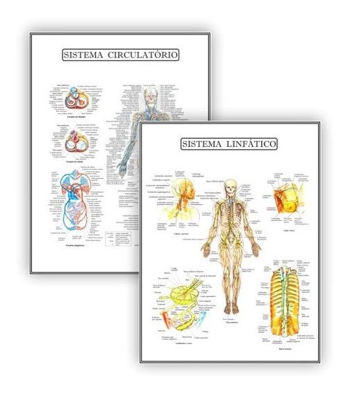 Kit 2 Poster Educação Circulatório Linfático - Plastificado