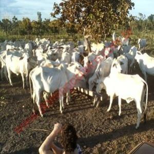 Venda - Fazenda - Zona Rural - Divinópolis Do Tocantins - To - D4827