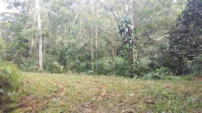 Terreno Rural À Venda, Coloninha, Gaspar. - Te0352