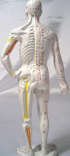 Modelo Humano Acupuntura, Altura 10
