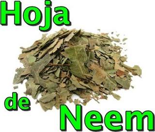 Hojas Secas De Neem