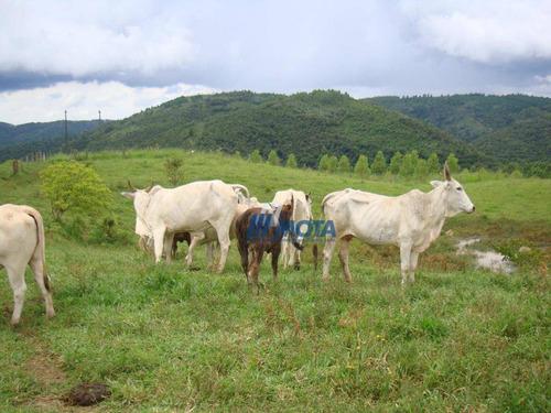 Fazenda Campo Largo 175,96 Alqueires - Fa0019