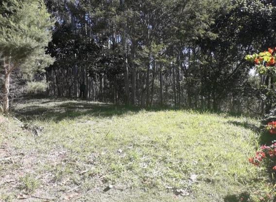 Terreno À Venda, 1505 M² - Eugênio Lefevre - Santo Antônio Do Pinhal/sp - Te0550