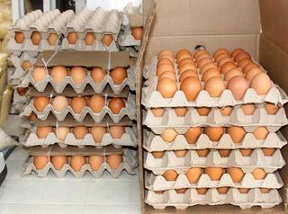 Huevos De Campo Organicos Oferta Entrega En El Dia