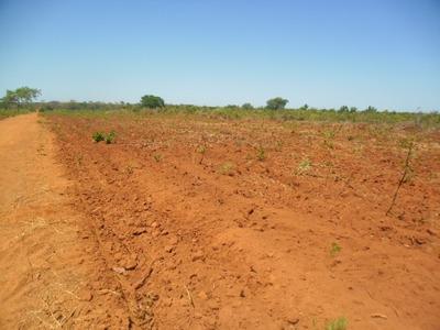 Fazenda A Venda Em Santa Rita - To (soja) - 336