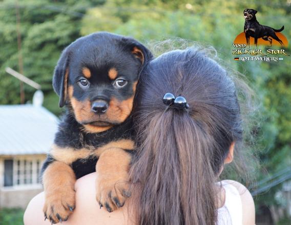 Rottweilers Cachorros Excelentes !100% Calidad