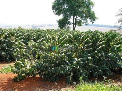 Fazenda De Café - 394,34 Ha - Região Piumhi (mg) - Codigo: Fa0007 - Fa0007