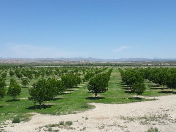 Rancho En Venta Coyame Chihuahua