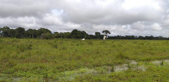 Fazenda Para Venda Em Tangará Da Serra, Oportunidade - 10045_2-1043633