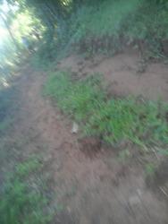 Vendo Terreno De 10 Hectáreas En Paraguari. J4098