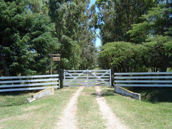 Campo De 100 Hectáreas, 2 Casas, Pileta, Galpón. Loma Verde