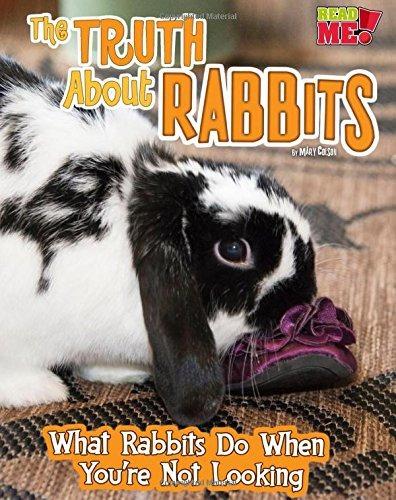 La Verdad Sobre Los Conejos Lo Que Hacen Los Conejos Cuando