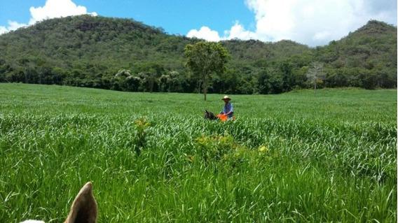Fazenda A Venda Em São Gabriel -ms (pecuária) - 1141