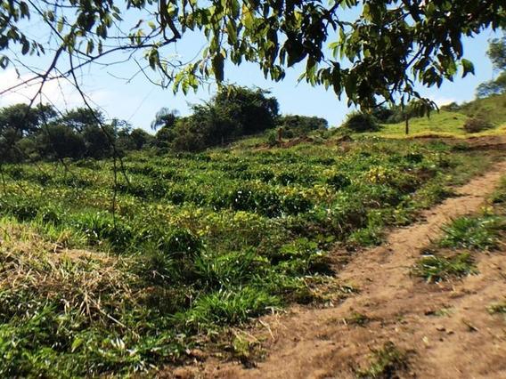 Sítio Para Comprar No Zona Rural Em Nepomuceno/mg - Nep972